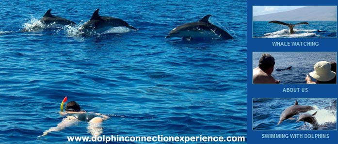 The dolphin conneciton experience