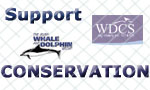 Support Dolphin Conservation with IWDG and WDCS